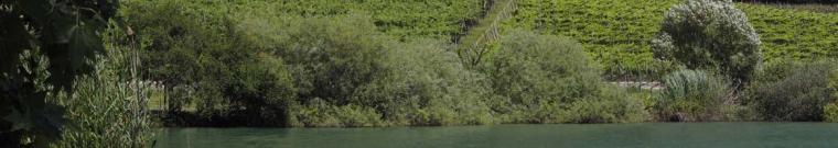 foto di un lago in primo piano con lo sfondo di una campagna collinare